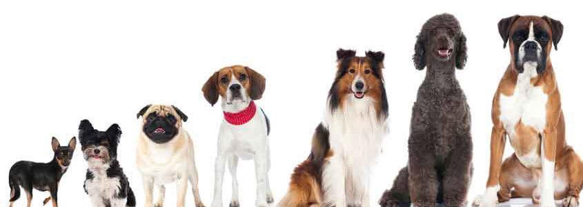 Köpek Alerjisi Belirtileri