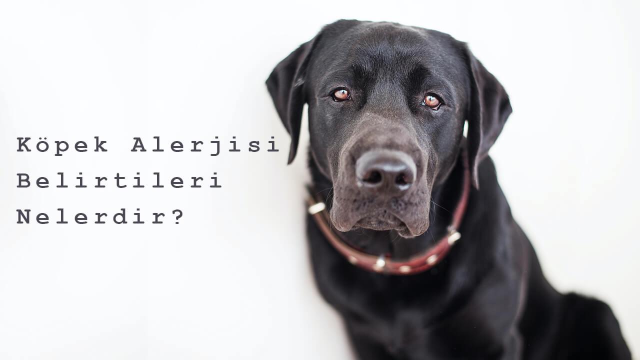 köpek alerjisi